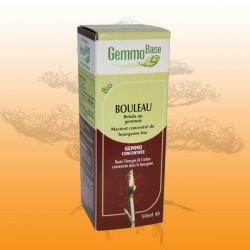 Bouleau (Betula Pubescens gemmae et Betula Pendula)