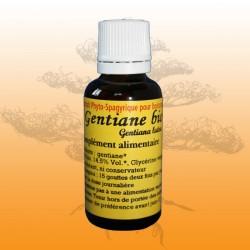 Gentiane (Gentiana lutea)