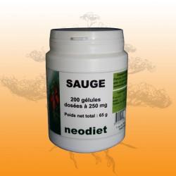 Sauge (Salvia officinalis)